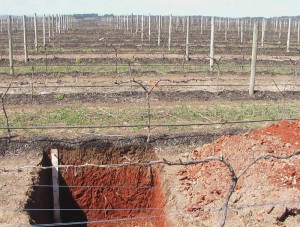 Soil Management Designs - Vineyard survey profile
