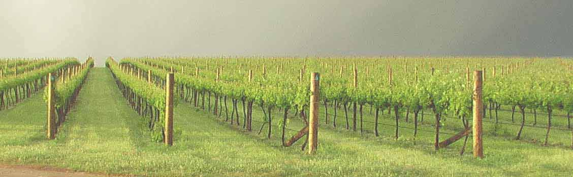 banner_viticulture